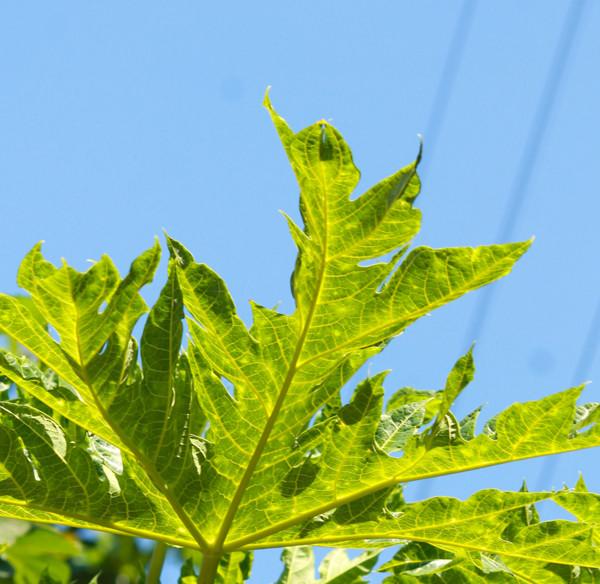 ayesha-dhurue-photography-mumbai-sky-leaves-green-beautiful-landscape