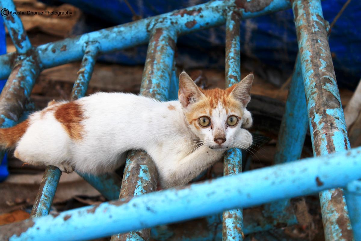 glare-of-the-innocent-ayesha-dhurue-photography-mumbai-cats (2)