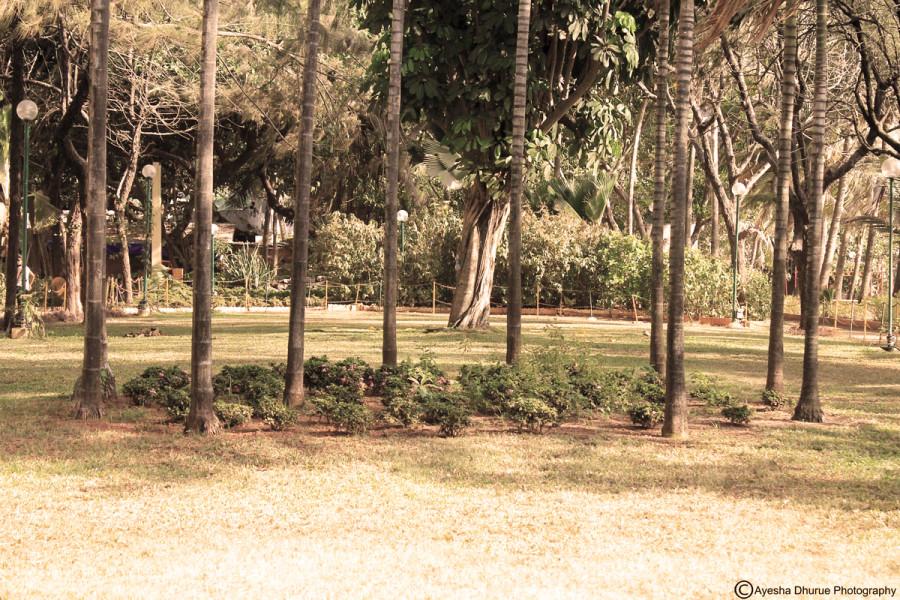 breach-candy-garden-ayesha-dhurue-photography-mumbai-6 - Copy