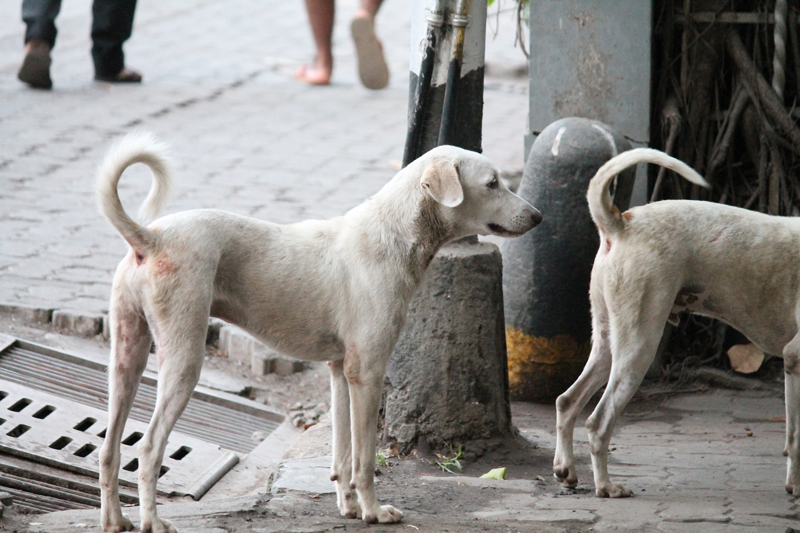 Bombay on Foot 12