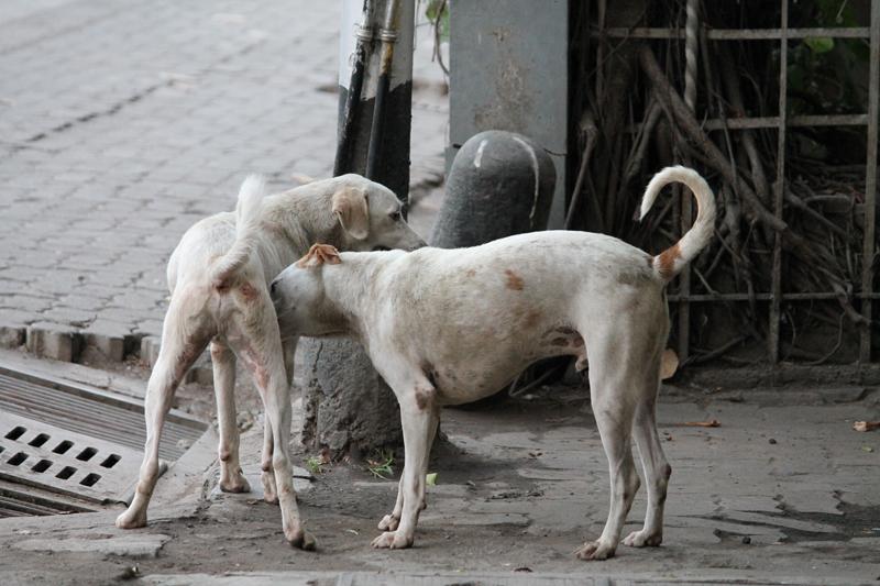 Bombay on Foot 13