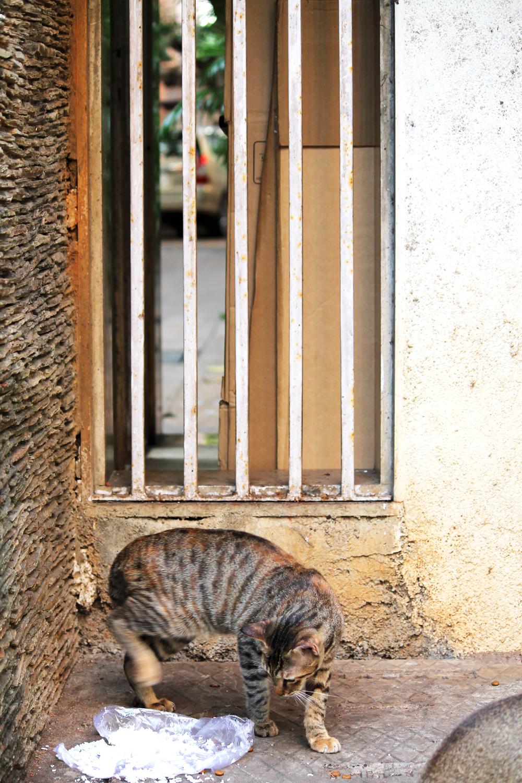 Street Photography- Ayesha Dhurue- For The Public Eye 3